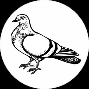 Adhésif tête animal - Pigeon - noir fond blanc