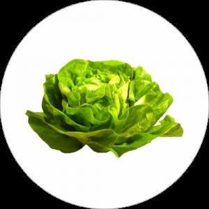 Adhésif Décor Légumes - Laitue - fond blanc