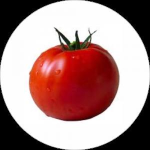 Adhésif Décor Légumes - Tomate - fond blanc