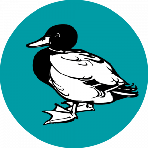 Adhésif Traçabilité Animale - Canard fond Vert Canard
