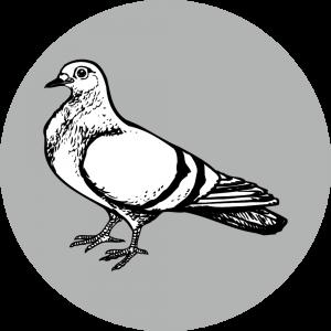 Adhésif Traçabilité Animale - Pigeon fond Gris
